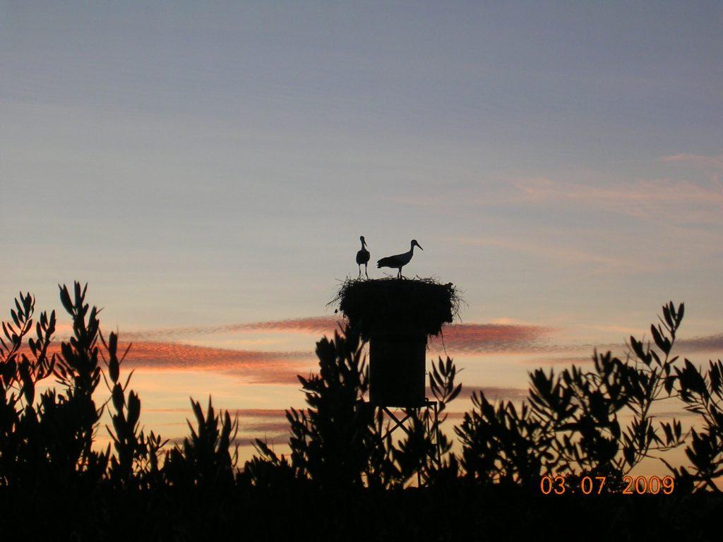 avistamiento de aves ornitología birding en azuaga badajoz extremadura