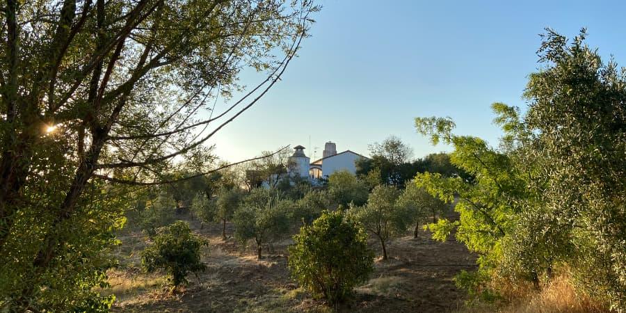 Establecimiento sostenible casa rural viña del duco