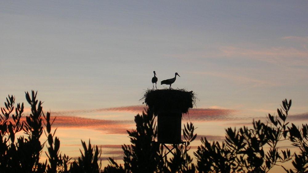 birding en extremadura casa rural azuaga viña del duco